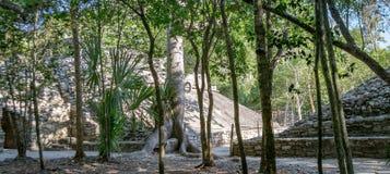 Cobaruïnes in wildernis stock fotografie
