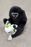 Cobaye alimentant de singe Images libres de droits