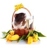 Cobaye dans un panier avec fleurs et un verre de champagne. Photographie stock libre de droits