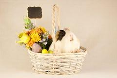 Cobaye Joyeuses Pâques avec des oeufs Photographie stock