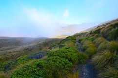 Cobb Valley. Kahurangi National Park, New Zealand stock photo
