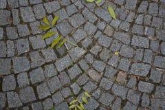 Cobble πέτρινο γκρι φωτογραφιών αποθεμάτων οδικού υποβάθρου με τα πράσινα φύλλα Στοκ Φωτογραφία