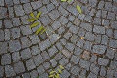 Cobble πέτρινο γκρι φωτογραφιών αποθεμάτων οδικού υποβάθρου με τα πράσινα φύλλα Στοκ εικόνες με δικαίωμα ελεύθερης χρήσης