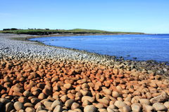 Cobble Beach, Ireland. A wide cobble beach in Ross Bay, County Clare, Ireland. The bay is overlooked by the small village of Fodry. A large patch of the cobble royalty free stock photography