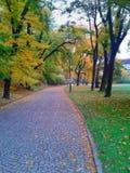 Cobble el camino en callejón del árbol del otoño con las hojas caidas imagen de archivo libre de regalías