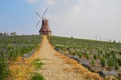 Cobble la manera al molino de viento de la cumbre en verano floreciente fotografía de archivo libre de regalías