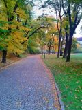 Cobble la strada in vicolo dell'albero di autunno con le foglie cadute immagine stock libera da diritti