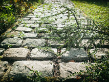 Cobble Path. Path with cobble stones in our garden Stock Photography