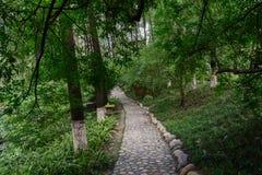 Cobble steenweg in luxuriant de zomerhout stock afbeeldingen