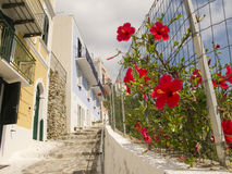 Cobble Steps and Flowers Stock Image