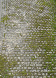 Cobble stone with moss top bird view Stock Image