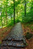 Cobble stone path through forest. Lovely nature scenery with tall trees and green foliage Stock Image