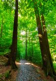 Cobble stone path through forest. Lovely nature scenery with tall trees and green foliage Royalty Free Stock Photography