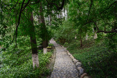 Cobble stone path in luxuriant summer woods. A cobble stone paved path in luxuriant summer woods stock images