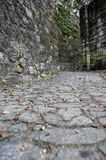 Cobble Stone Streets. In Savannah Georgia. Green Moss crawling up the walls stock image