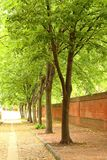 Cobble Stone Tree Lined Street Royalty Free Stock Image