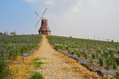 Cobble way to hilltop windmill in flowering summer Royalty Free Stock Photography