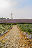 Cobble way to lighthouse on flowering hilltop Royalty Free Stock Photos