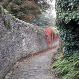 Old cobbled lane. Cobbled lane street with dry stone wall and creeping plants Royalty Free Stock Photo