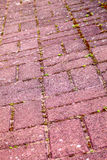 Cobbled path Stock Images