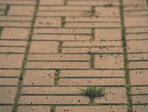 Cobbled pavement with a bunch of grass. Stone sidewalk in variation  with a green grass Royalty Free Stock Images