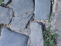 Cobbled pavement and grass Royalty Free Stock Image