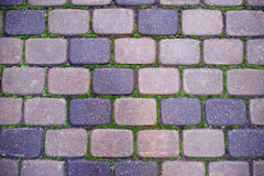 Cobbled pavement with moss Stock Photo