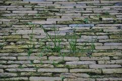 Cobbled paving stones stock images