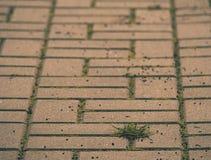Cobbled Pflasterung mit einem Bündel Gras Steinbürgersteig in der Veränderung mit einem grünen Gras Lizenzfreie Stockbilder