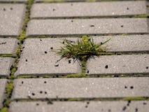 Cobbled Pflasterung mit einem Bündel Gras Steinbürgersteig in der Veränderung mit einem grünen Gras Stockfotografie