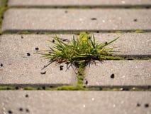 Cobbled Pflasterung mit einem Bündel Gras Steinbürgersteig in der Veränderung mit einem grünen Gras Stockbilder