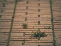 Cobbled Pflasterung mit einem Bündel Gras Steinbürgersteig in der Veränderung mit einem grünen Gras Lizenzfreie Stockfotos