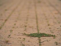 Cobbled Pflasterung mit einem Bündel Gras Steinbürgersteig in der Veränderung mit einem grünen Gras Stockbild