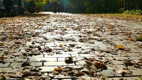 Slow motion. Romantic season is autumn. The road is strewn with yellow foliage. stock footage