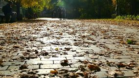 Slow motion. Romantic season is autumn. The road is strewn with yellow foliage. stock video footage