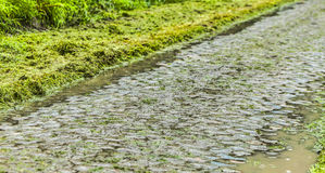 Cobbled Road in a Rainy Day Stock Image