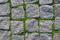 Cobbled road surface. Close-up Stock Images