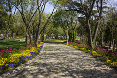 Cobbled road with trees. And colorful flowers Royalty Free Stock Photos