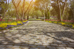Cobbled road with trees. And colorful flowers Royalty Free Stock Photography