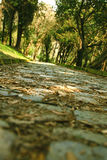 Cobbled stone path Royalty Free Stock Photo