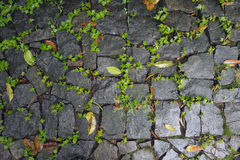 Cobbled stone sidewalk Stock Photo