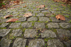 Cobbled Stones Road. Old Cobbled Stones Road Close up with Autumn Leaves and Green Grass Royalty Free Stock Photography
