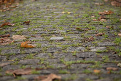 Cobbled Stones Road. Old Gray Cobbled Stones Road closeup view Stock Photography