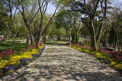 Cobbled Straße mit Bäumen Lizenzfreie Stockfotos