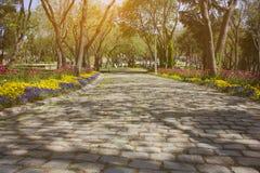 Cobbled Straße mit Bäumen Lizenzfreie Stockfotografie