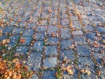 Cobbled Straße mit Herbstlaub Lizenzfreies Stockfoto