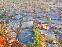 Cobbled Straße mit Herbstlaub Lizenzfreie Stockfotos