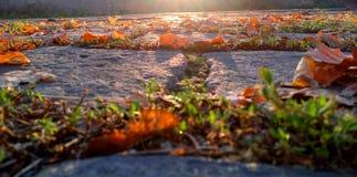 Cobbled Straße mit Herbstlaub und Sonnenschein Stockbild