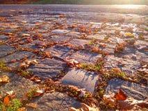 Cobbled Straße mit Herbstlaub und Sonnenschein Lizenzfreie Stockfotos