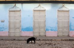Cobbled street  black dog - cuba Royalty Free Stock Image
